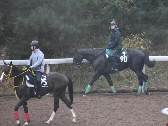 ミッキーブラック(写真右)京都2歳Sに向けて帰厩(撮影:井内利彰)