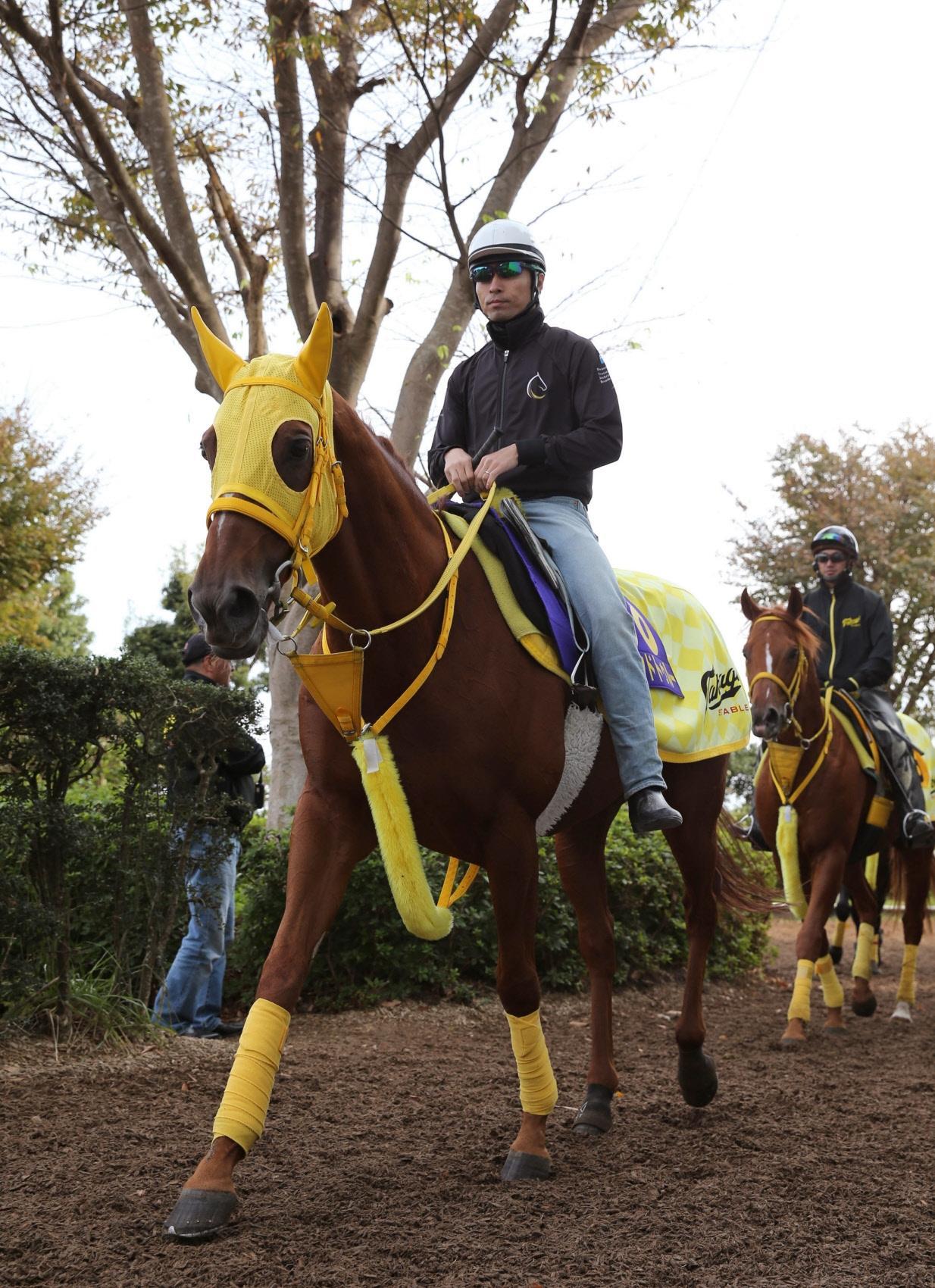 船橋競馬の佐藤裕太厩舎に転入するサウンドトゥルー