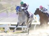 【笠松グランプリ】兵庫のエイシンバランサーがV ラブバレット4連覇ならず4着/地方競馬レース結果