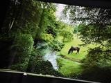 アイルランドで繁殖生活を送るウオッカの素顔が満載! 愛蔵版写真集「ウオッカinアイルランド」発売!