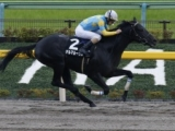 【園田・兵庫ジュニアグランプリ】ルメール騎手のデルマルーヴルが人気の中心/地方競馬見どころ