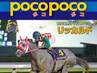 南関東競馬のフリーペーパー『poco poco』Vol.12が完成!