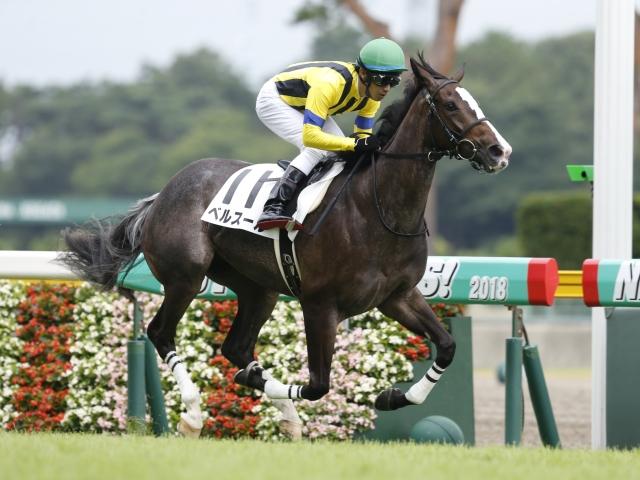 アヴドゥラ騎手を確保し阪神JFに出走予定のベルスール(c)netkeiba.com、撮影:下野雄規