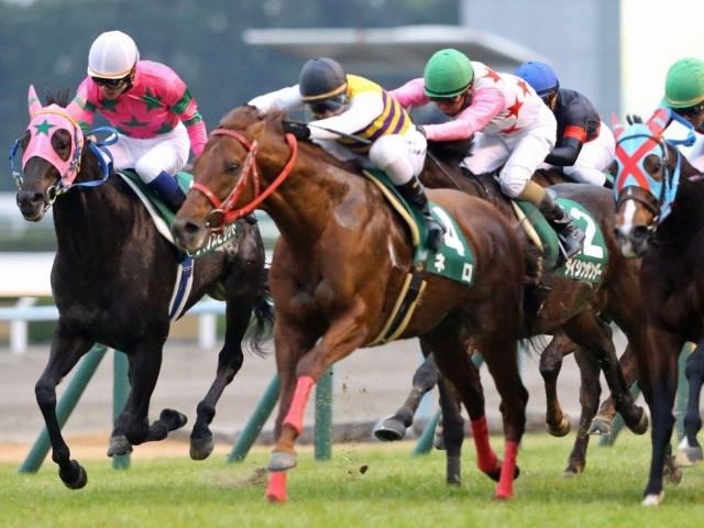 瀧川寿希也騎手とのコンビで出走するネロ