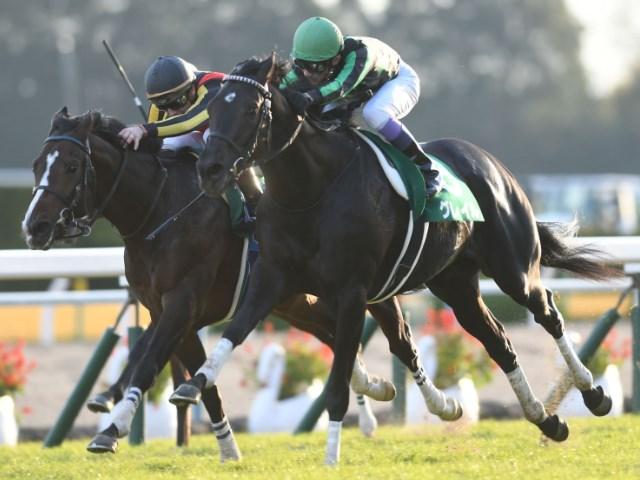 津村明秀騎手と初コンビを組むグレイル
