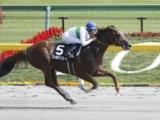 【地方競馬】ゴールデンバローズが大井に移籍、2015年のUAEダービー3着馬