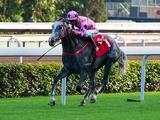 【香港国際競走予想】今年はどの馬にもチャンスあり! 3名の現地関係者が注目するイチ推し馬とは?/海外レース展望