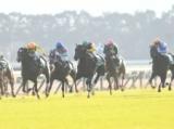 【ターコイズS】牝馬限定のハンデ重賞、好走の条件とは/JRAレース展望