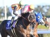 東京大賞典の選定馬発表 ゴールドドリーム、ヒガシウィルウィンなど16頭
