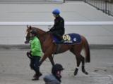 パフォーマプロミス、有馬記念1週前追い切り速報/栗東トレセンニュース