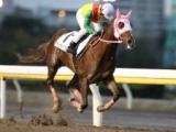 【クラーベセクレタM】船橋の2歳牝馬シントーアサヒがデビューから2戦連続の大差勝ち!左海誠二騎手「そういう器という気がします」