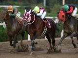 【園田金盃】ファン投票1位のマイタイザンが競り合いを制す/地方競馬レース結果