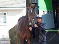 【朝日杯FS】グランアレグリア抜かりなし 38年ぶり牝馬制覇へ