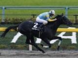 【川崎・全日本2歳優駿】デルマルーヴルは4枠5番、ガルヴィハーラは7枠11番/地方競馬枠順確定