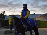 【有馬記念】モズカッチャン「上積み感じる」 4年ぶり6頭目の牝馬Vへ