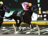 【JRA】インカンテーション引退、種牡馬に ダートで重賞を6勝