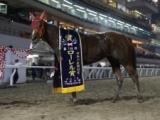 【大井・東京2歳優駿牝馬】2歳牝馬のチャンピオン決定戦にアークヴィグラスなどが挑む/レースの見どころ(地方競馬)