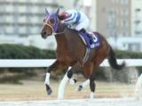 【名古屋・湾岸ニュースターC】ブライアンビクターが今年最初の重賞を制す/地方競馬レース結果