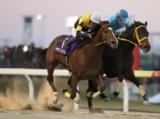 【川崎・報知オールスターC】ヤマノファイトが人気2頭の競り合いを制す/地方競馬レース結果