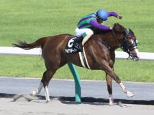 【TCK女王盃】(大井) JRA所属の出走予定馬および補欠馬について