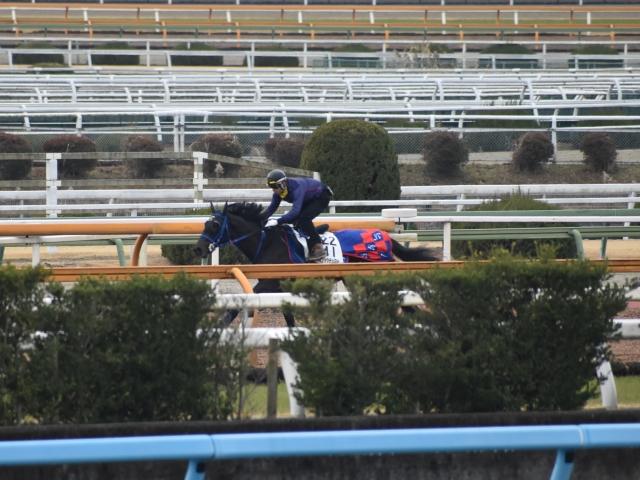 リラックスした走りが本番でどう出るか楽しみなメイショウテッコン(撮影:井内利彰)