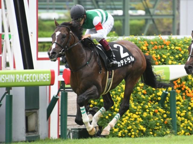 カテドラルなど京成杯の出走馬・騎手が確定した