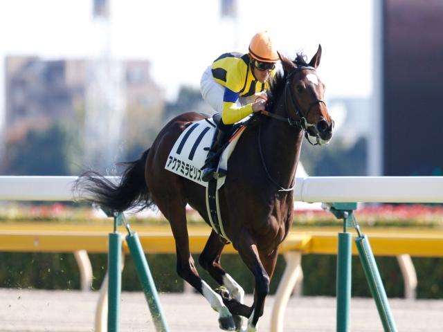 新馬戦を完勝したアクアミラビリスは6枠11番からの発走(撮影:下野雄規)