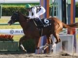 【東海S】武豊騎手騎乗の5連勝中インティに多くの支持/JRA重賞予想オッズ