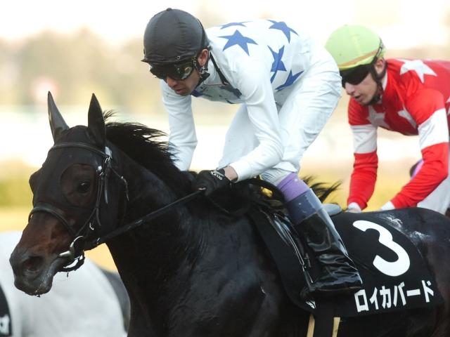 レックススタッドで種牡馬入りする良血馬ロイカバード(写真は2016年元町S優勝時)