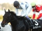 ロイカバードが種牡馬入り、セレクトセールで2億5200万円の高額馬