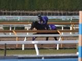 ビーチサンバ、クイーンC追い切り速報/栗東トレセンニュース