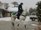 【POG】サトノジャスミン、タニノミッションなど角居厩舎3歳馬動向