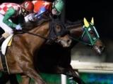 【船橋・チバテレ盃】ベンテンコゾウが南関東2連勝 御神本訓史騎手「馬が何とか凌いでくれたので」