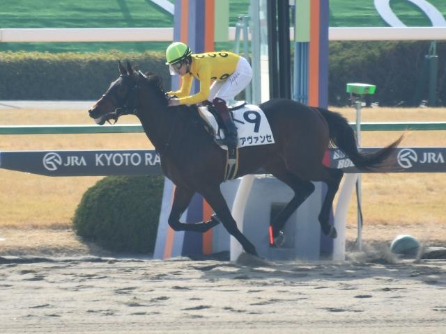 京都2Rはアヴァンセが勝利(c)netkeiba.com