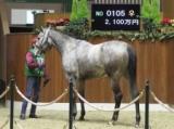 冬季繁殖馬セール開催 ムードインディゴの娘・チークトゥチークが最高価格