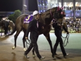 シゲルカガがイーストスタッドで種牡馬入り、パイロ産駒初の後継種牡馬に