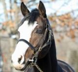 2017年BCターフ優勝馬、タリスマニックが種牡馬として北海道に到着