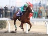 【川崎記念】今年最初のJpnI、ケイティブレイブ&福永祐一騎手が単勝1倍台の1本被り/地方競馬見どころ