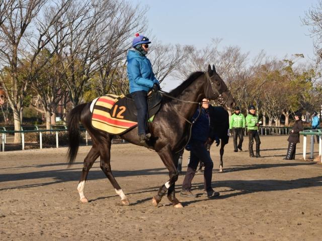 戸崎圭太騎手との初コンビできさらぎ賞に出走するアガラス(撮影:佐々木祥恵)