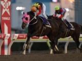 【次走】2016年の東京大賞典勝ち馬、アポロケンタッキーはダイオライト記念を視野に