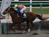 【佐賀記念】佐賀の祭典 地元馬として出走のグレイトパール、断然人気のテーオーエナジーなど/地方競馬見どころ