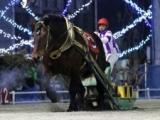 【地方競馬】ホクショウマサルがばんえい競馬で19連勝を達成