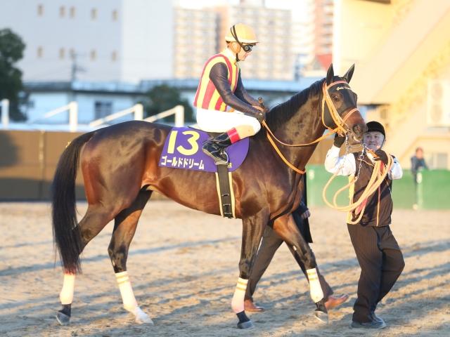 フェブラリーSに登録した ゴールドドリーム(c)netkeiba.com、撮影:高橋正和