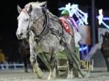 【地方競馬】17日にキサラキクの引退セレモニーを実施