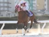 【名古屋・梅見月杯】兵庫のマイタイザンが6馬身差圧勝/地方競馬レース結果