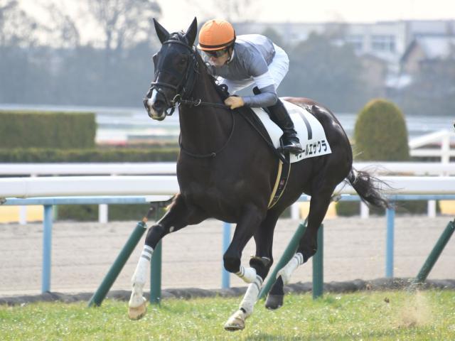 川田将雅騎手騎乗のキュールエサクラが勝利した(c)netkeiba.com