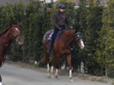 【フェブラリーS】インティ武豊騎手「いつもタイムが速くラストまでしっかり走れる上にキレるのが凄い」/ねぇさんのトレセン密着
