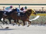 【ヒヤシンスS】オーヴァルエースが競り合いを制し無傷の3連勝/JRAレース結果