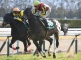 【京都牝馬S】売上31億円超で昨年から増加