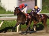 【園田・ユースC】7年ぶりに復活した3歳戦 NHKマイルCトライアルの代表馬選定競走/地方競馬見どころ